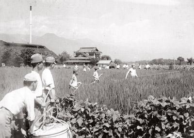 南安曇農学校水稲消毒作業